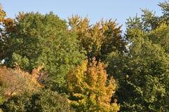 jesienni drzewa Fotografia Royalty Free