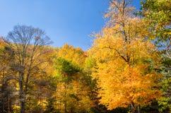 Jesienni drzewa i niebieskie niebo Zdjęcie Stock