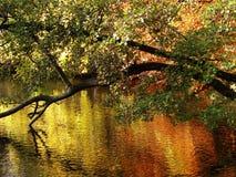 Jesienni drzewa odbijają w wodzie Obraz Royalty Free