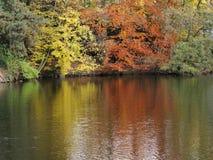 Jesienni drzewa odbijają w wodzie Obrazy Stock