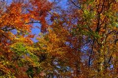 Jesienni drzewa przy lasem w Carpathians Zdjęcie Royalty Free