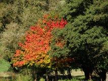 Jesienni drzewa przy wodą Zdjęcia Stock