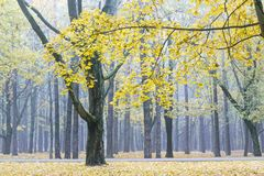 Jesienni drzewa, spadać liście i footpath w miasto parku zanurzonym, Zdjęcia Royalty Free