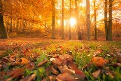 Jesienni drzewa w świetle słonecznym Zdjęcie Stock