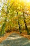 Jesienni drzewa w świetle słonecznym Fotografia Royalty Free