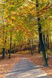 Jesienni drzewa w świetle słonecznym Obrazy Royalty Free