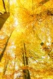 Jesienni drzewa w świetle słonecznym Zdjęcia Stock