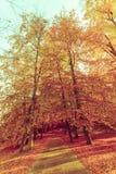Jesienni drzewa w świetle słonecznym Obraz Stock
