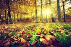 Jesienni drzewa w świetle słonecznym Zdjęcia Royalty Free