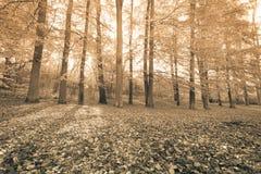 Jesienni drzewa wśrodku lasu Fotografia Stock