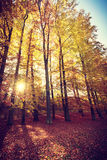 Jesienni drzewa wśrodku lasu Obraz Stock