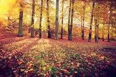 Jesienni drzewa wśrodku lasu Zdjęcie Royalty Free