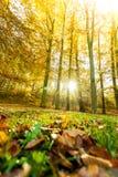 Jesienni drzewa wśrodku lasu Obraz Royalty Free