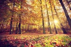Jesienni drzewa wśrodku lasu Zdjęcia Royalty Free