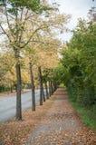 Jesienni drzewa z spada liśćmi Obraz Stock