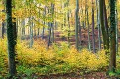 jesienni kolory Obrazy Stock
