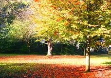jesienni kolory Obraz Stock