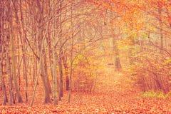 Jesienni krzaki w lesie Obraz Royalty Free