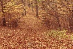 Jesienni krzaki w lesie Zdjęcie Stock
