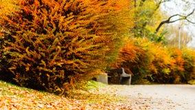 Jesienni krzaki w lesie Zdjęcie Royalty Free