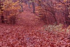 Jesienni krzaki w lesie Fotografia Stock
