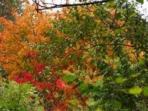 jesienni liść Obraz Royalty Free