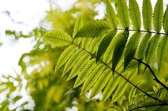 jesienni liść Obrazy Stock