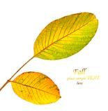 jesienni liść Obrazy Royalty Free