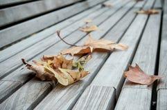 Jesienni liście klonowi na drewnianej ławce Fotografia Stock