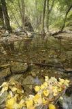 Jesienni liście przy Andarax rzeką Obraz Royalty Free
