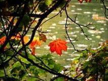 Jesienni liście przy wodą Obraz Stock