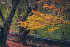 jesienni liście klonowi Zdjęcia Stock