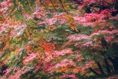 jesienni liście klonowi Zdjęcie Stock