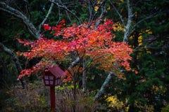 jesienni liście klonowi Fotografia Royalty Free