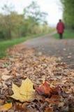 jesienni liście klonowi na drodze z kobiety odprowadzeniem Obrazy Stock