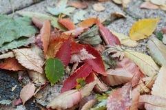 jesienni liście na bruku w ulicie Obrazy Royalty Free