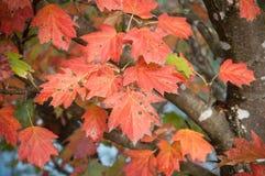 jesienni liście na drzewie w granica kanale Zdjęcia Stock