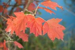 jesienni liście na drzewie w granica kanale Zdjęcia Royalty Free