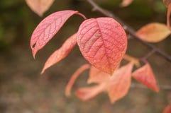 Jesienni liście w miastowym parku Zdjęcia Stock