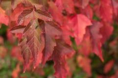 Jesienni liście w miastowym parku Zdjęcie Stock