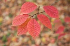Jesienni liście w miastowym parku Fotografia Stock