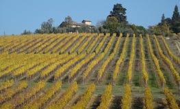 jesienni winnicy zdjęcie royalty free