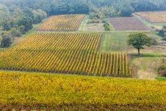 Jesienni winnicy, Burgundy Zdjęcia Royalty Free