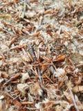 Jesienni zmieloni liście i gałązki Fotografia Stock