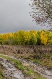 Jesienny, żółty, drewna, ulistnienie, tło, botanika, brown Fotografia Royalty Free