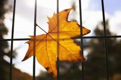 Jesienny żółty liść na grille Zdjęcia Royalty Free