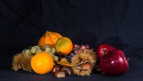 Jesienny życie 5 wciąż Obraz Royalty Free