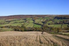 Jesienny anglika krajobraz Obrazy Stock