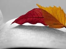 jesienny czytanie Zdjęcia Royalty Free
