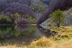 jesienny drewno Zdjęcia Royalty Free